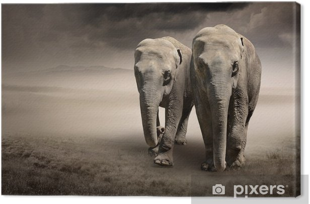 Pair of elephants in motion Canvas Print - Animals