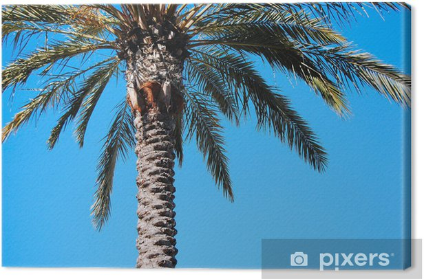 Palm Tree, Rodeo Drive, Los Angeles Canvas Print - Holidays