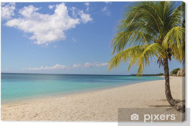 Palm treen on exotic Caribbean beach against blue sky Canvas Print - Countries