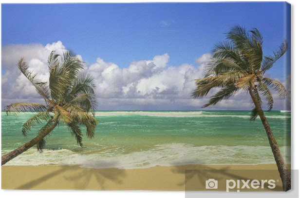 Palm Trees Hanging Over a Sandy White Beach Canvas Print - Themes