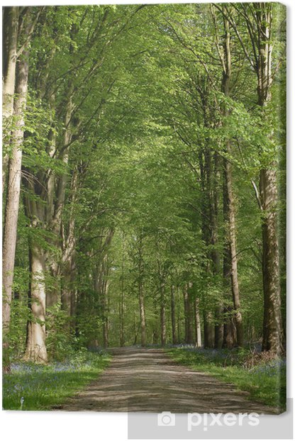 path in forest Canvas Print - Trees