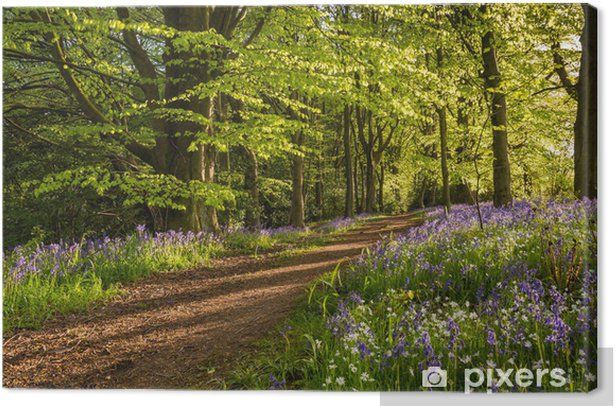 Path through Bluebell Wood Canvas Print - Outdoor Sports