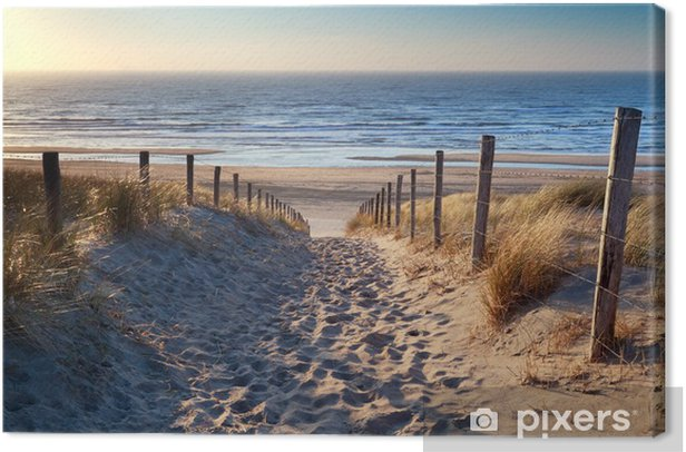 path to North sea beach in gold sunshine Canvas Print - Destinations