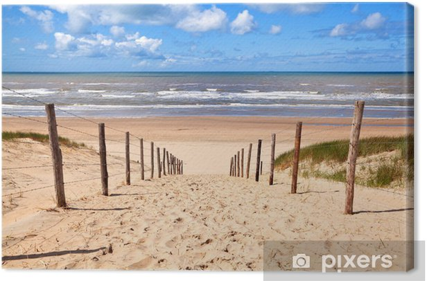 path to sandy beach by North sea Canvas Print - Destinations