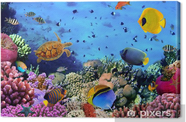 Photo of a coral colony Canvas Print - Themes