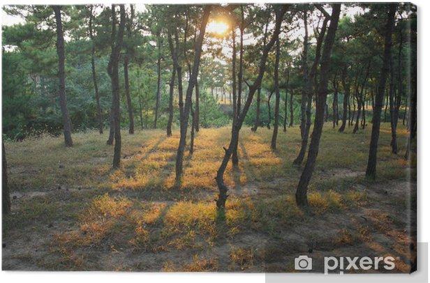 Pine Forest Canvas Print - Seasons