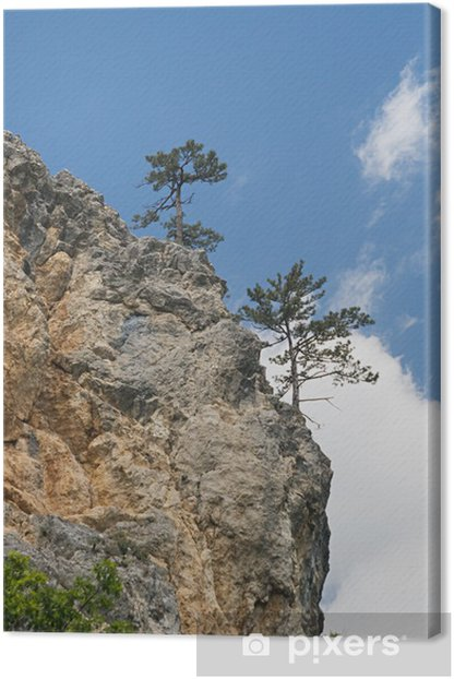 Pine-trees on a cliff Canvas Print - Europe