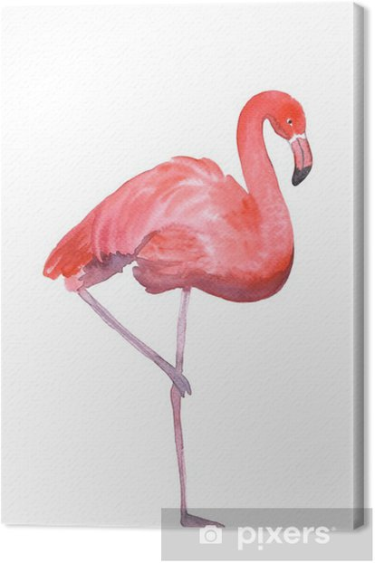 Pink flamingo isolated Canvas Print - Animals