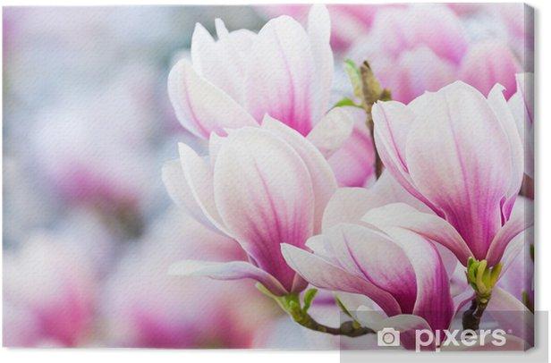 pink flower magnolia Canvas Print -