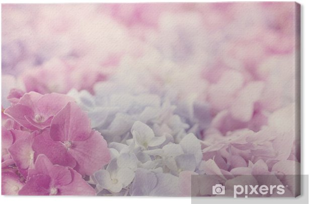 Pink hydrangea flowers Canvas Print - Themes