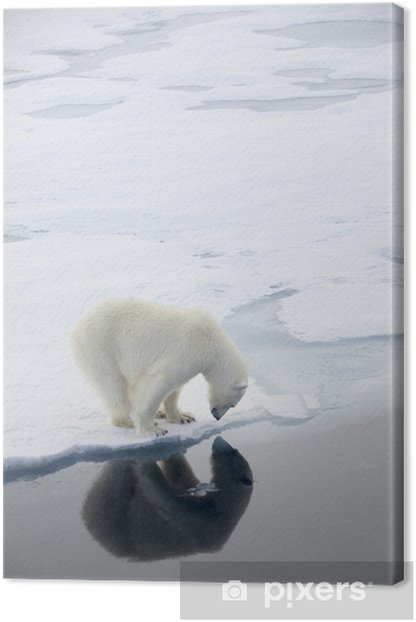 Polar bear waiting for seals Canvas Print - Themes