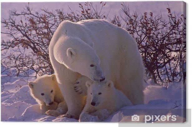 Polar bears in Canadian Arctic Canvas Print - Themes