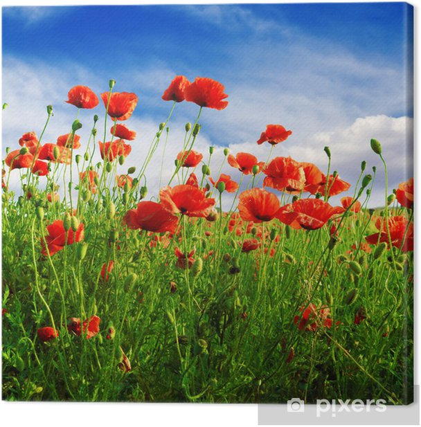 poppies on green field Canvas Print - Themes