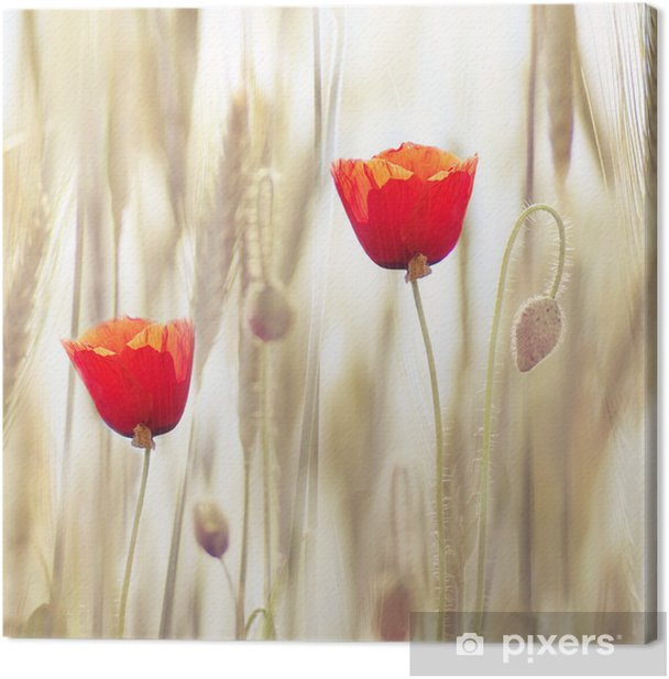 Poppies Canvas Print - Poppies