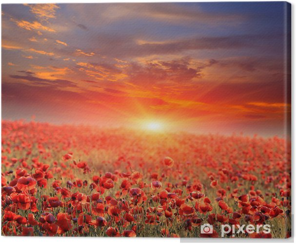 poppy field on sunset Canvas Print - Themes