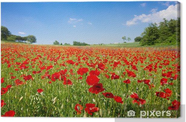 Poppy field Canvas Print - Themes