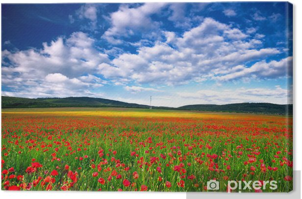 Poppy field Canvas Print - Nature and Wilderness