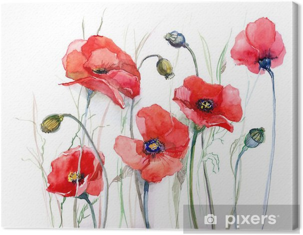 poppy Canvas Print - Nature