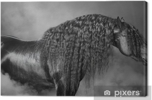 Portrait of black Frisian horse with long mane in the smoke Canvas Print - Prints and posters Horses