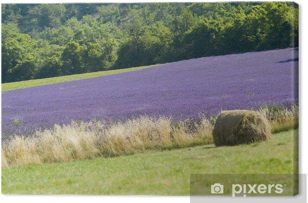 Provance lavander field Canvas Print - Flowers