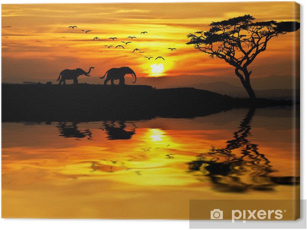 puesta de sol en Africa Canvas Print - Themes