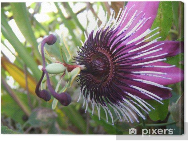 Purple passion flower Canvas Print - Flowers
