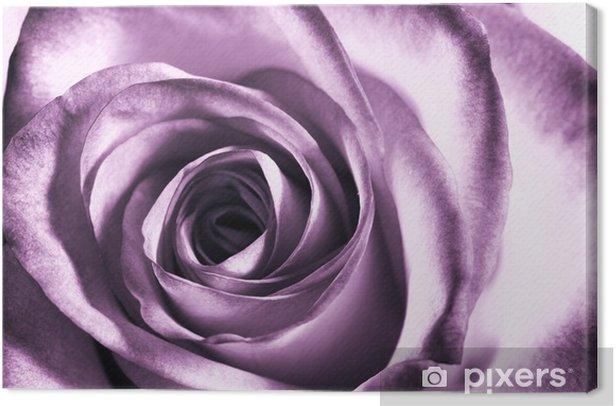 Purple Rose Canvas Print Themes