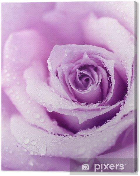 Purple wet rose background Canvas Print - Themes
