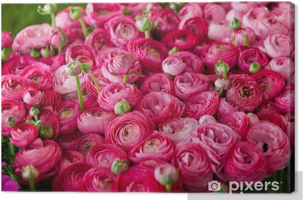 ranuncoli #3 Canvas Print - Flowers