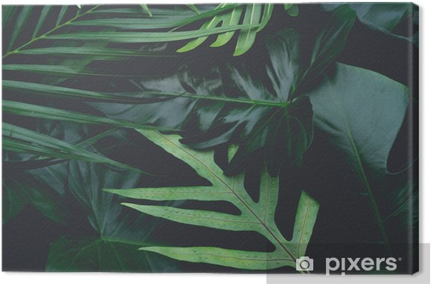 Real leaves with white copy space background.Tropical Botanical nature concept design. Canvas Print - Graphic Resources