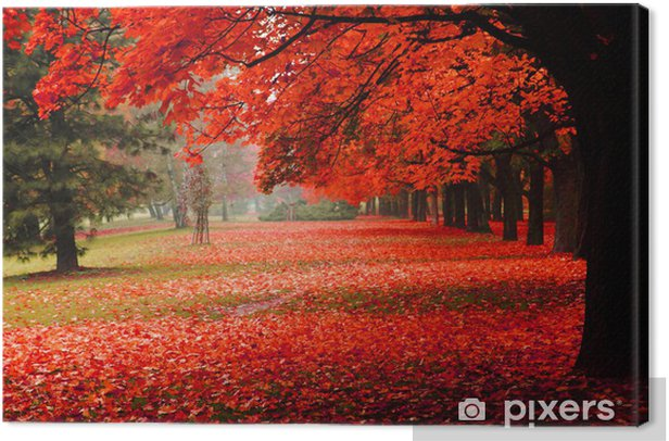 red autumn in the park Canvas Print - Destinations