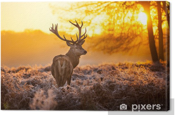 Red Deer in the morning sun Canvas Print - Styles