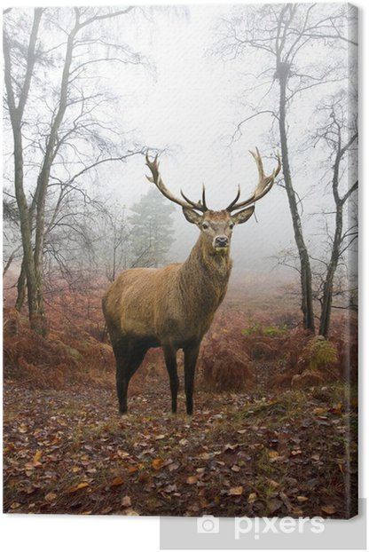 Red deer stag in foggy misty Autumn forest landscape at dawn Canvas Print -