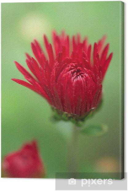 red flower Canvas Print - Plants