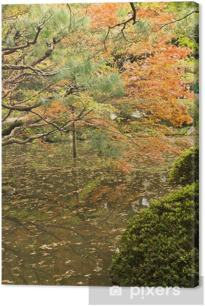 Red maples planted on the shore and reflection. Canvas Print - Countryside
