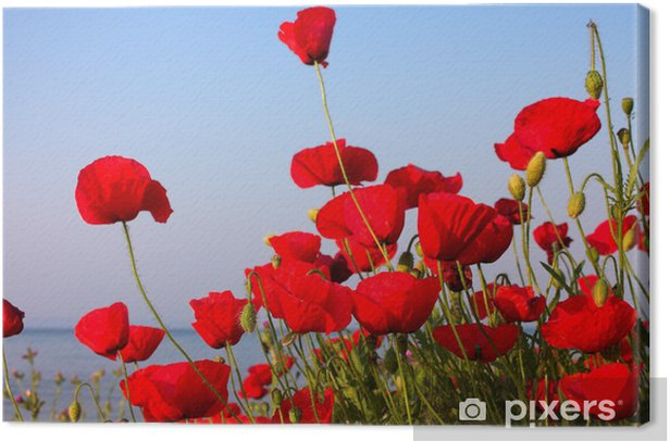 red poppies and blue sky and sea Canvas Print - Themes