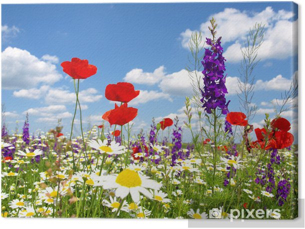 red poppy and wild flowers Canvas Print - Themes