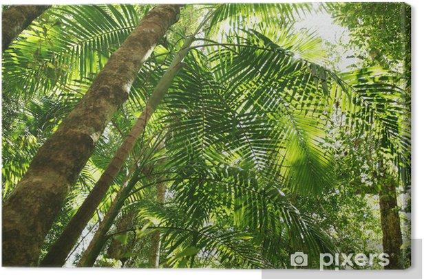 Regenwald, Tropenwald Canvas Print - Themes
