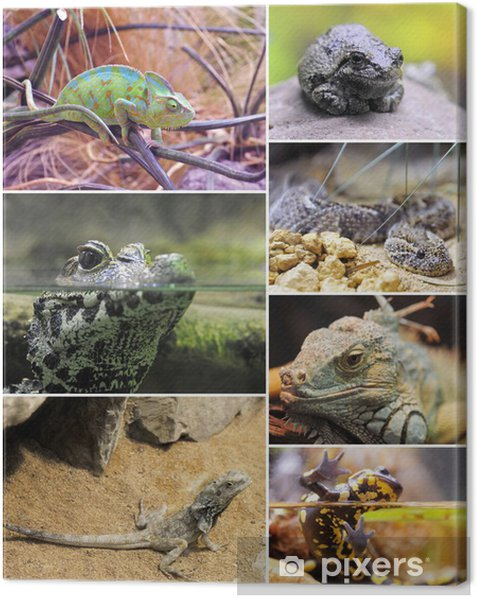 reptiles and amphibiens Canvas Print - Imaginary Animals