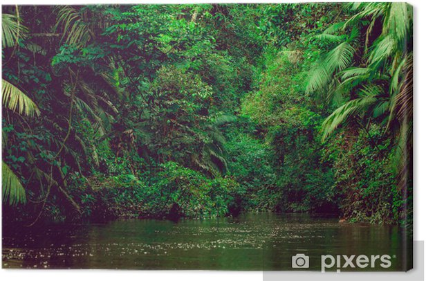 River deep in jungle forest. Amazonas composition. Canvas Print - Themes
