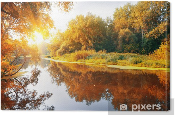 River in a delightful autumn forest Canvas Print - Themes