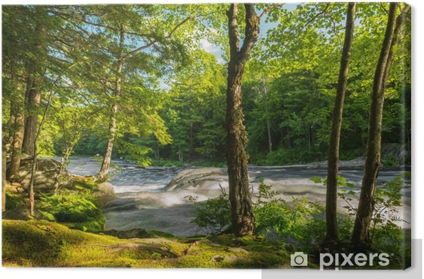 River in the forest Canvas Print - Themes