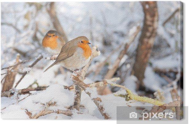 Robin redbreasts sitting in snow Canvas Print - Birds