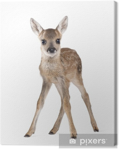 Roe Deer Fawn, standing against white background Canvas Print - Wall decals