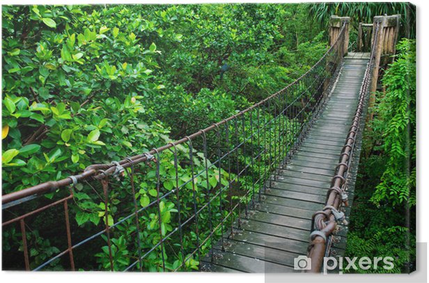 Rope walkway through the treetops in a rain forest Canvas Print - Themes