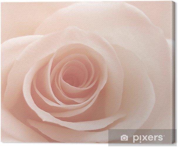 rose Canvas Print - Themes