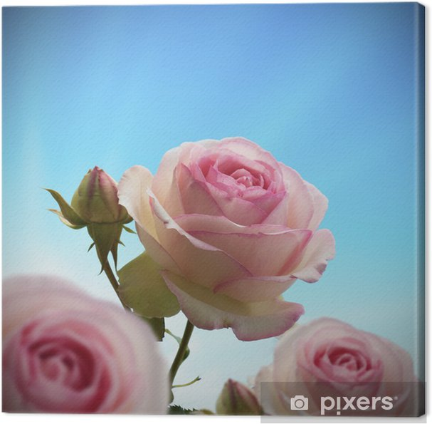 Rosier Grimpant Fleurs Roses Couleur Rose Ciel Bleu Canvas Print