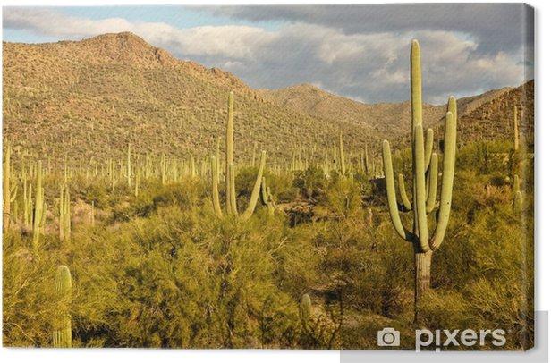 Saguaro National Park Canvas Print - America