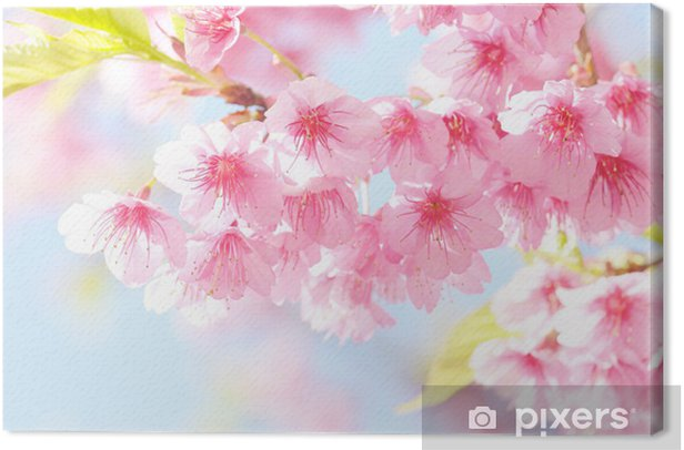 sakura flower Canvas Print - Themes