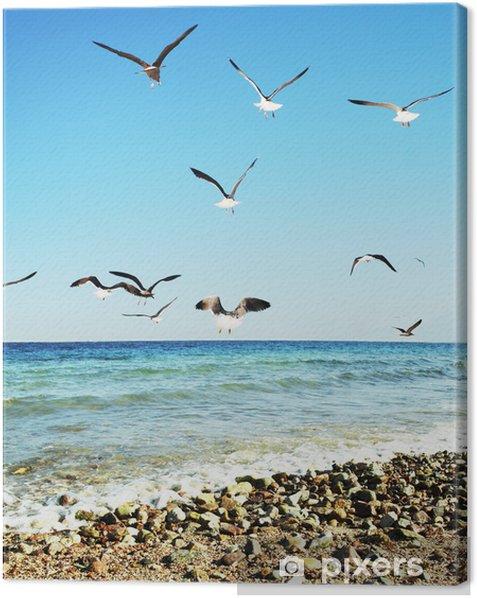Sea gulls Canvas Print - Water